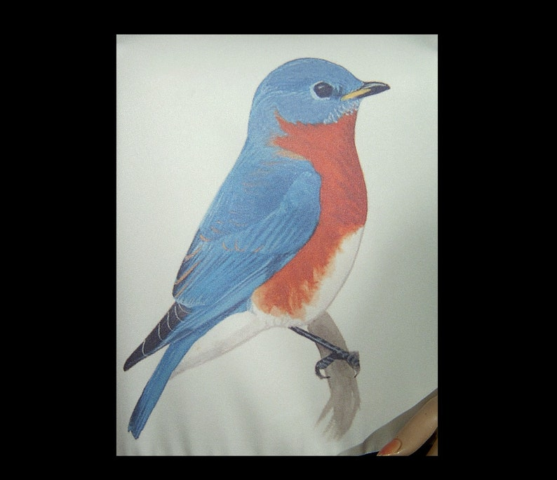 XS Small ~ Mod 1960s 1970s robin print mini dress ~ pointy collar sleeveless sheath ~ black white red blue ~ large bird novelty print ooak