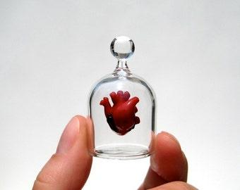 Anatomical Heart in a Jar, Hand Blown Glass Miniature, Anatomically Correct Heart