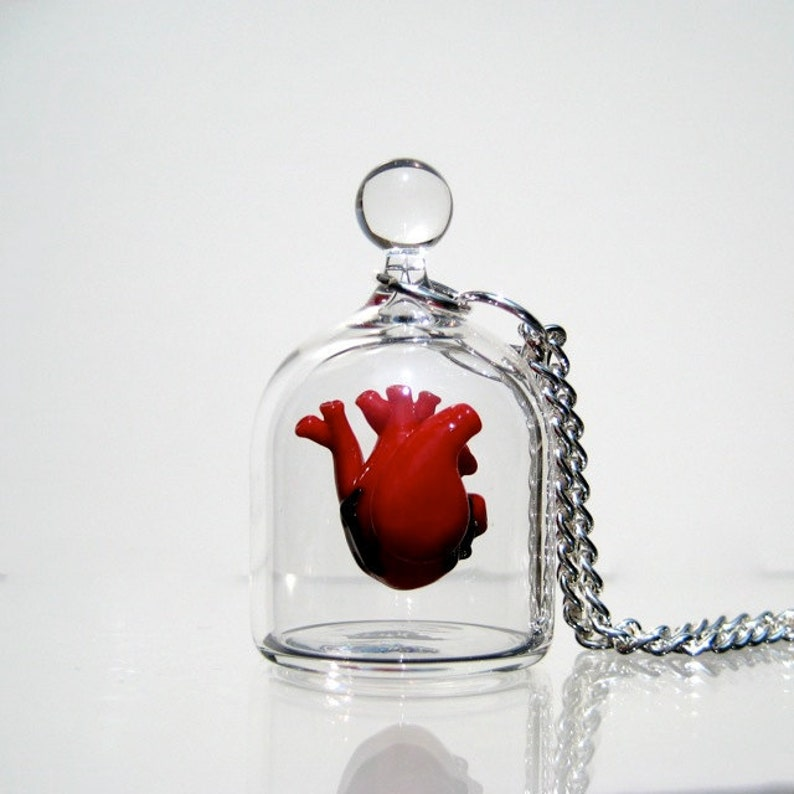Anatomical Heart Jewelry  Necklace  Heart in a Jar image 0