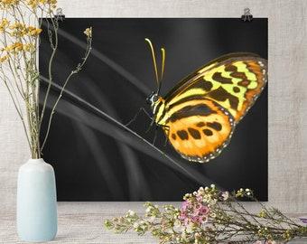 Butterfly Art, Butterfly Poster, Butterfly Wall Art, Selective Color Art, Selective Color Poster, Butterfly Art Images, Butterfly Art Poster