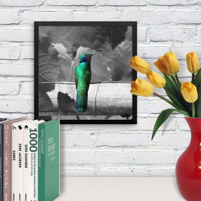 Framed Print  Hummingbird Selective Color Wall Art  image 0