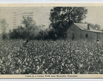 Cotton Field Farm Cabin Farming Memphis Tennessee 1949 postcard