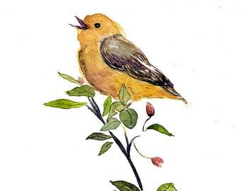 "Yellow Warbler, watercolour bird, ARCHIVAL GICLEE PRINT, 8"" x 10"""