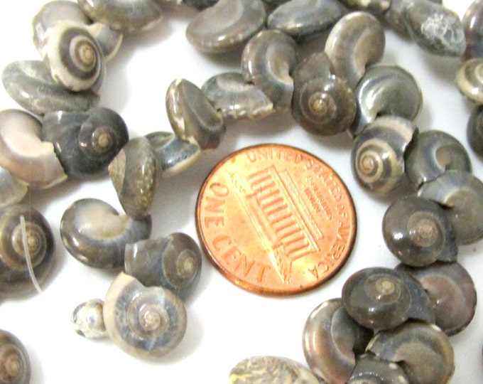 1 full strand  - Drilled natural oval coin shape spiral shell beads - FULL 15 inches strand - SP059