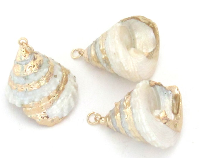 Small size conical pearl Troca shell gold edged pendant - 1 piece - SP031B