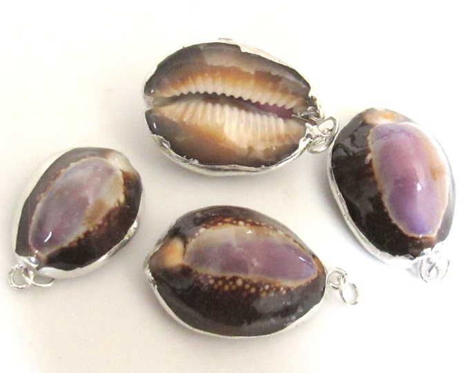 3 Pendants- Exotic Silver plated purple top cowrie shell pendant  - SP036