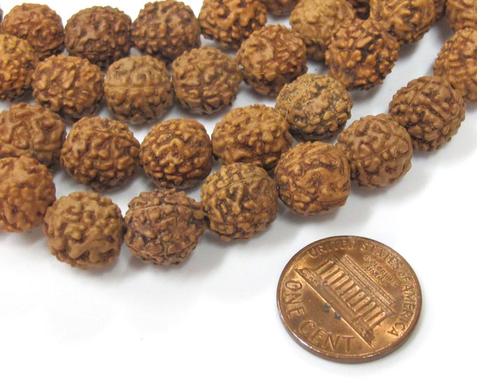 10 rudraksha beads - Natural Rudraksha seed beads from Nepal 9-10 mm -tibetan mala supplies  ML072B