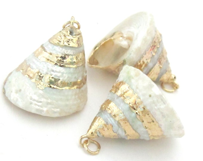 Gorgeous conical pearl Troca shell gold edged pendant - 1 piece - SP031A