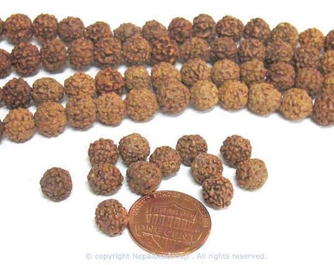 25 beads - Natural Rudraksha seed beads from Nepal 7-8 mm -tibetan mala making supplies  ML108C