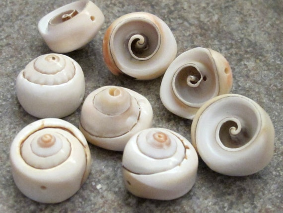 5 or 10 Natural Spiral Shaped Shell Buttons Size Between 24-31mm in Packs of 2