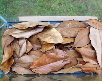 Magnolia leaf litter terrariums/ vivariums / Hermit Crabs /frogs/ geckos/ reptiles