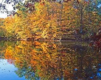 Four seasonal prints of Shades State Park, Parke County, Indiana