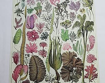 Vintage Algae Print on Canvas paper