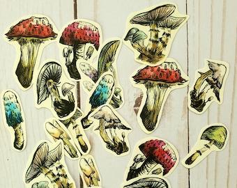 Paper Stickers Realistic Mushroom Collage Scrapbook Journal Travel Nature Sticker Set Mycology Journaling Realitic Fungi Free Shipping Art
