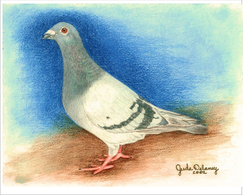 Racing Homer Pigeon Note Cards
