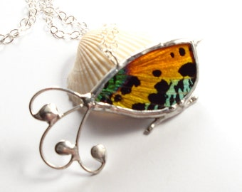 Real Moth Necklace, Bird Pendant, Sunset Moth Jewelry, Butterfly Wing
