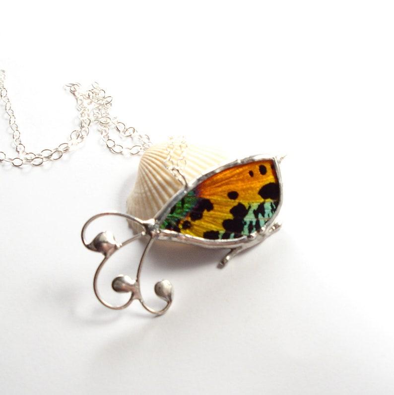 Real Moth Necklace Bird Pendant Sunset Moth Jewelry image 0