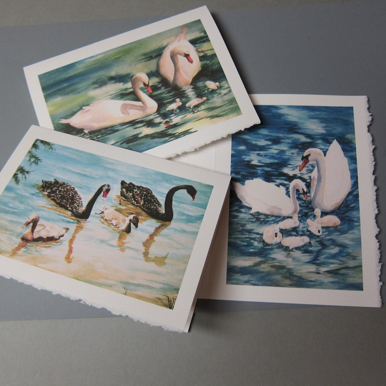Swans 3 Assorted Note Cards 5 x 7 Note cards Watercolor print image 0