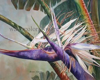 Tropical Bird of Paradise, 11 x 14  watercolor print Flower, Home Decor, plant, Decorative art, Florida  purple white - green