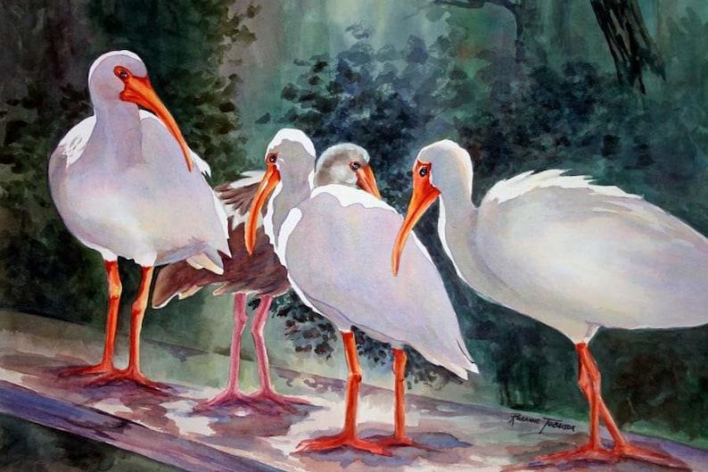 Ibis Watercolor Florida shorebird watercolor Print  8 x 10 or image 0