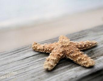 Coastal Photography- Starfish 21, dreamy sea star, peaceful home decor
