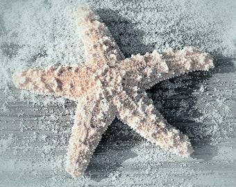 Coastal Photography- Starfish, sea life, dreamy teal wall art