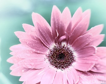 Flower Photography- Gerbera Daisy in Pink, dreamy blossom, cheerful home decor