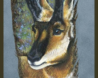 Pronghorn Antelope Painted Feather Original