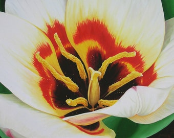 "Tulip Ablaze 24"" x 36"" Original Oil Painting on Canvas, Artwork Home, Horizontal Art, Close up Flower Painting, Living room Decor, Big Tulip"