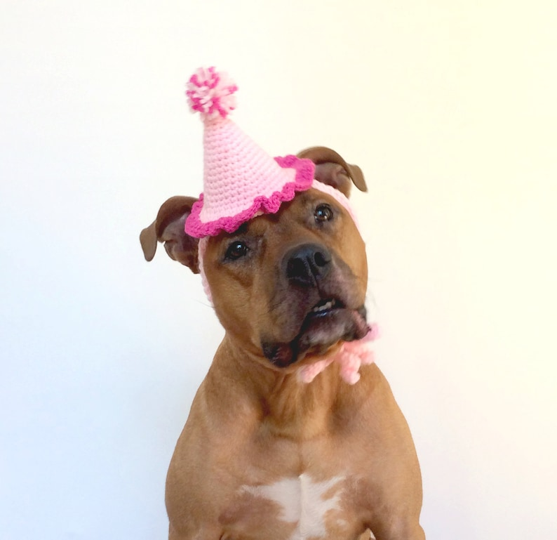 Dog Birthday Hat Gotcha Day Pink Party