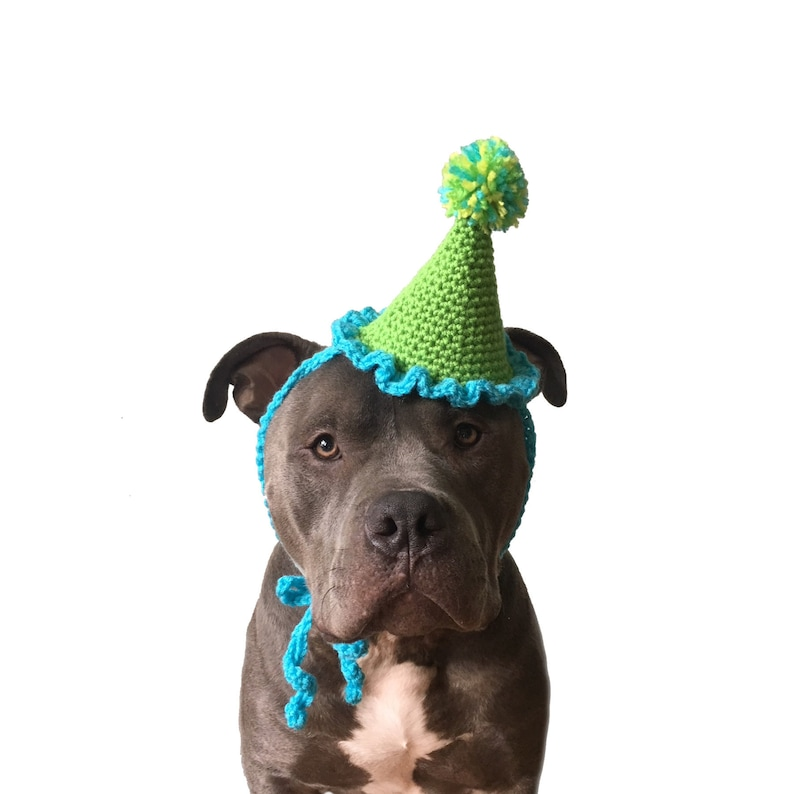Party Hat Dog For Dogs Gotcha Day