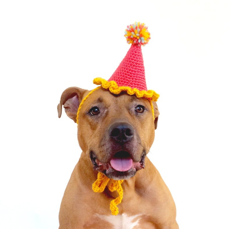 Dog Birthday Hat Party Gotcha Day