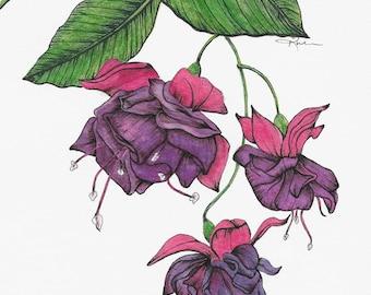 Fuchsia Fine Art Print Watercolor Pen and Ink
