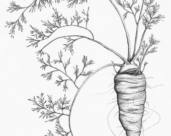 Carrot Fine Art Print