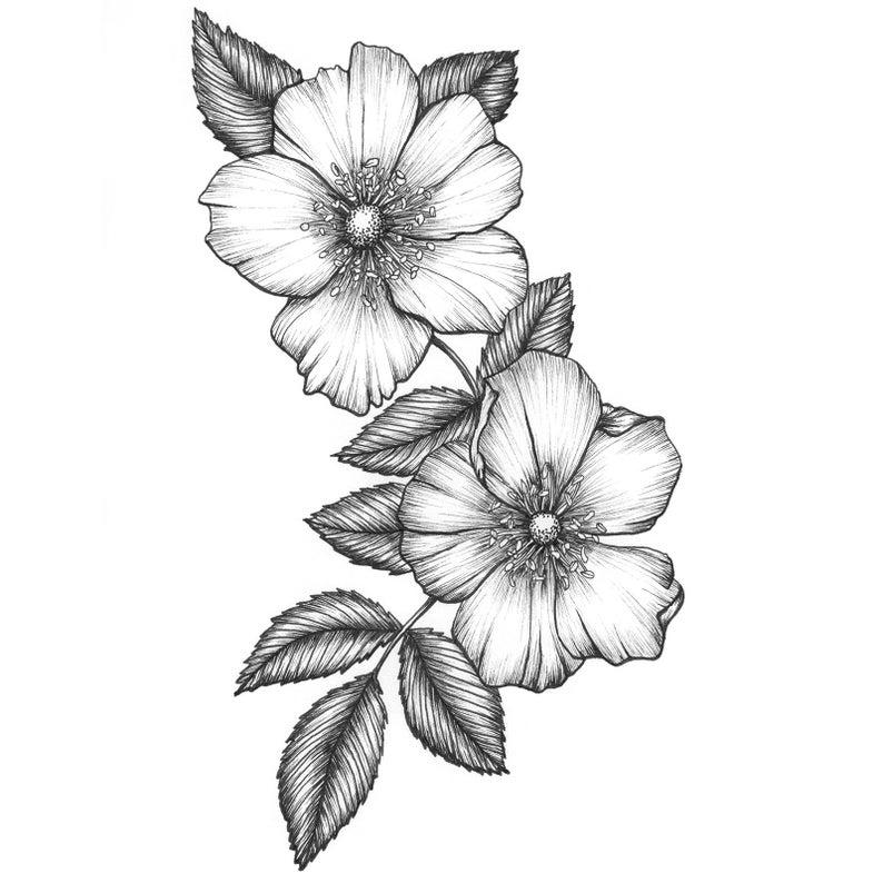 Carolina Rose Fine Art Print Wild Rose Botanical Etsy