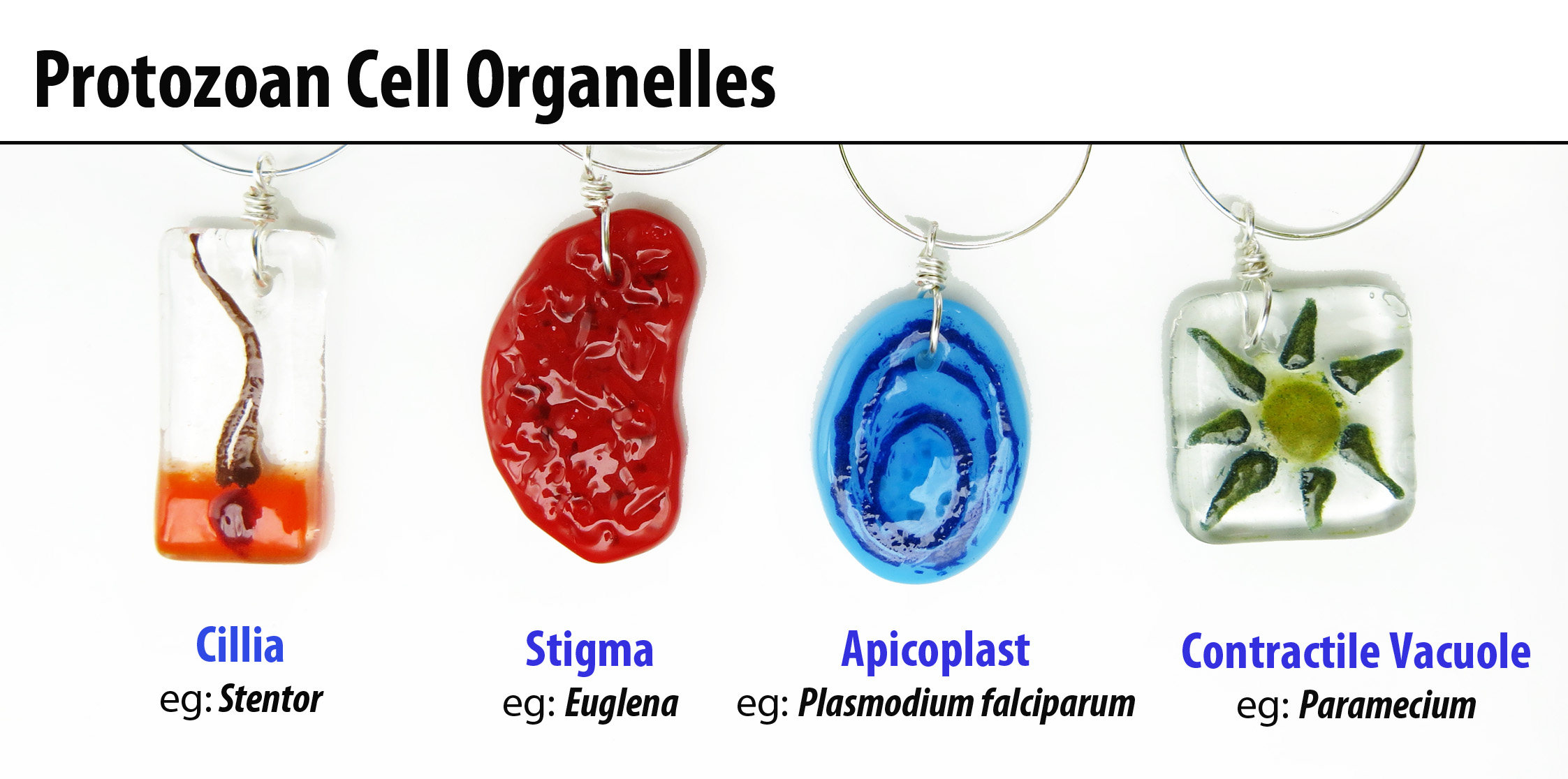 Protozoan Cell Oranelles Wine Glass Charms Fused Glass | Etsy