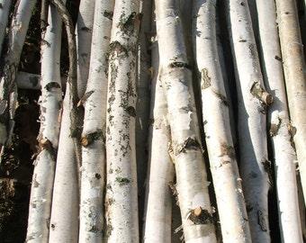 Chuppah /Birch Poles