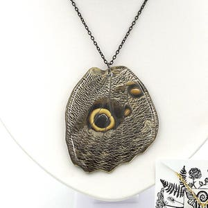 Wing Jewelry Owl Face Butterfly Fore Wing Brown Moth Resin Wing Real Butterfly