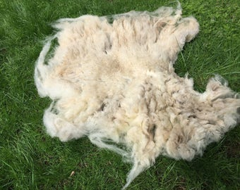 Jenny's matted LILAC Jacob Sheep fleece