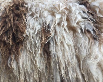 SALE ON Hoggett (virgin) fleece from Ank-Lambs Joleen