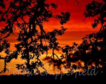 Sunset Photography, Beautiful Orange Sunset Decor, Oregon Landscape Photo Print, Red Vivid Sky Photo Print, Oak Tree Mountain Vista Wall Art