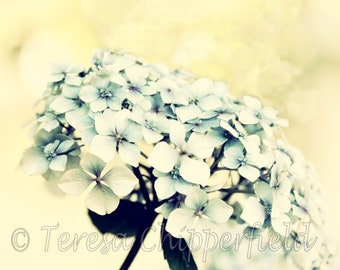 Flower Photography, Hydrangea Photo Print, Dreamy, Vintage Gentle Creamy Soft Floral Wall Art, Gift For Gardener, Pastel Bedroom Wall Decor