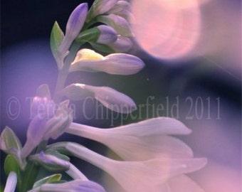 Flower Photography, Pretty Floral, Glistening Bokeh Glowing Delphinium, Digital Art Print , Dreamy, Purple, Pink, Floral Decor, 16x20, 20x24