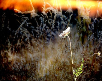 Sunset Weeds Print, Landscape Photography, Lonely Plant Print, Portland Park Photo, Long Summer Grass Photo, Abstract Digital layered Print