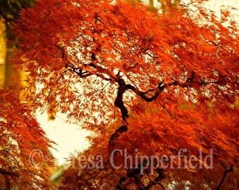 Japanese Maple Tree Photo Print, Vibrant Orange Maple Tree Photo, Portland Oregon, Autumn Fall Color Photo Print, Rust Bokeh Leaves, Dreamy