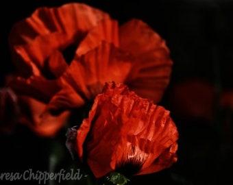 Oriental Poppy Photography, Soft Night Flower Print, Red Poppies Print, Orange Flower Photography, Red Poppy Wall Art Photo, 5x7, 8x12 16x24