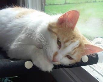 Sea Life - Curious Cats Window Perch