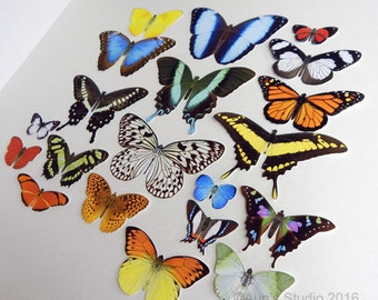 Paper Butterflies Naturalistic - Realistic butterfly cut outs - Large Set of 20