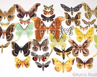 Paper Moths - realistic paper moth cut outs - large collection of 30 pieces
