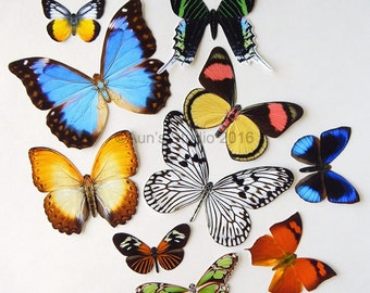 Realistic Paper Butterflies - Cut outs - Set of 10 paper butterfly cut outs - set #3
